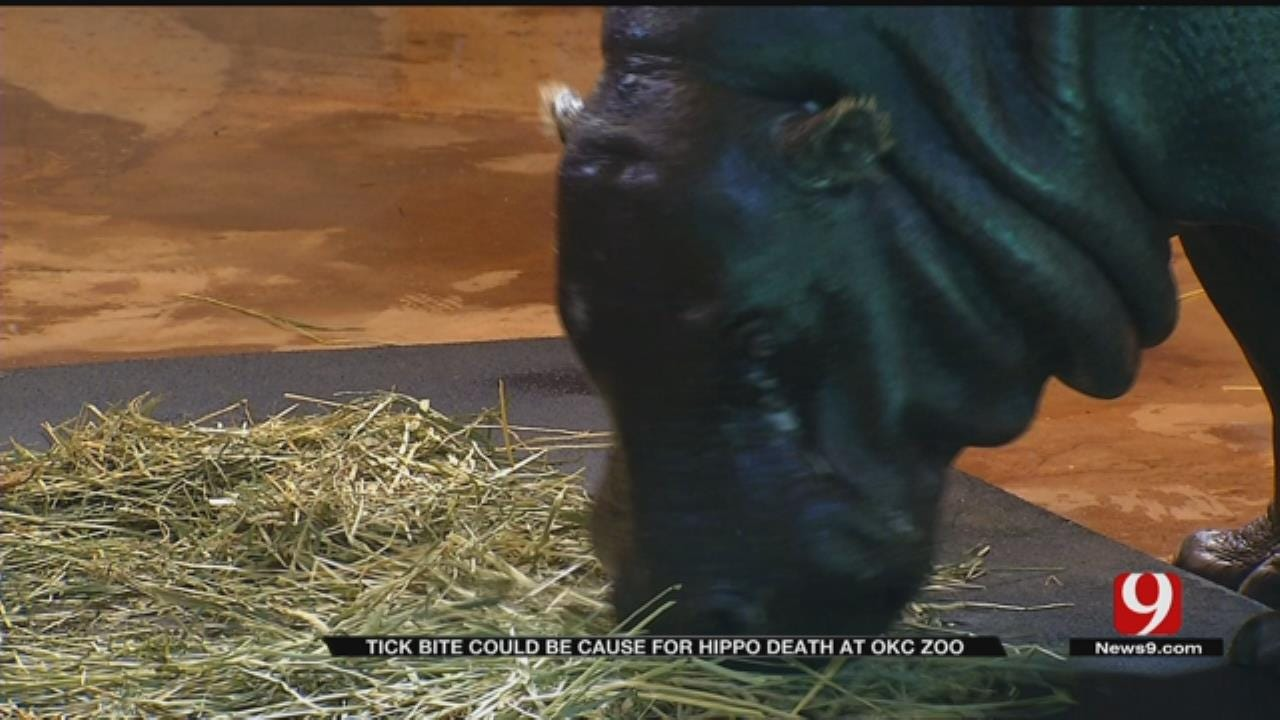 Tick Could Have Caused Hippo's Death At OKC Zoo