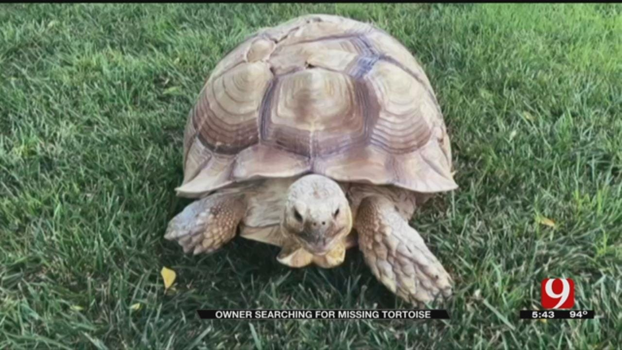 Yukon Man Offers Reward In Finding Missing Pet Tortoise