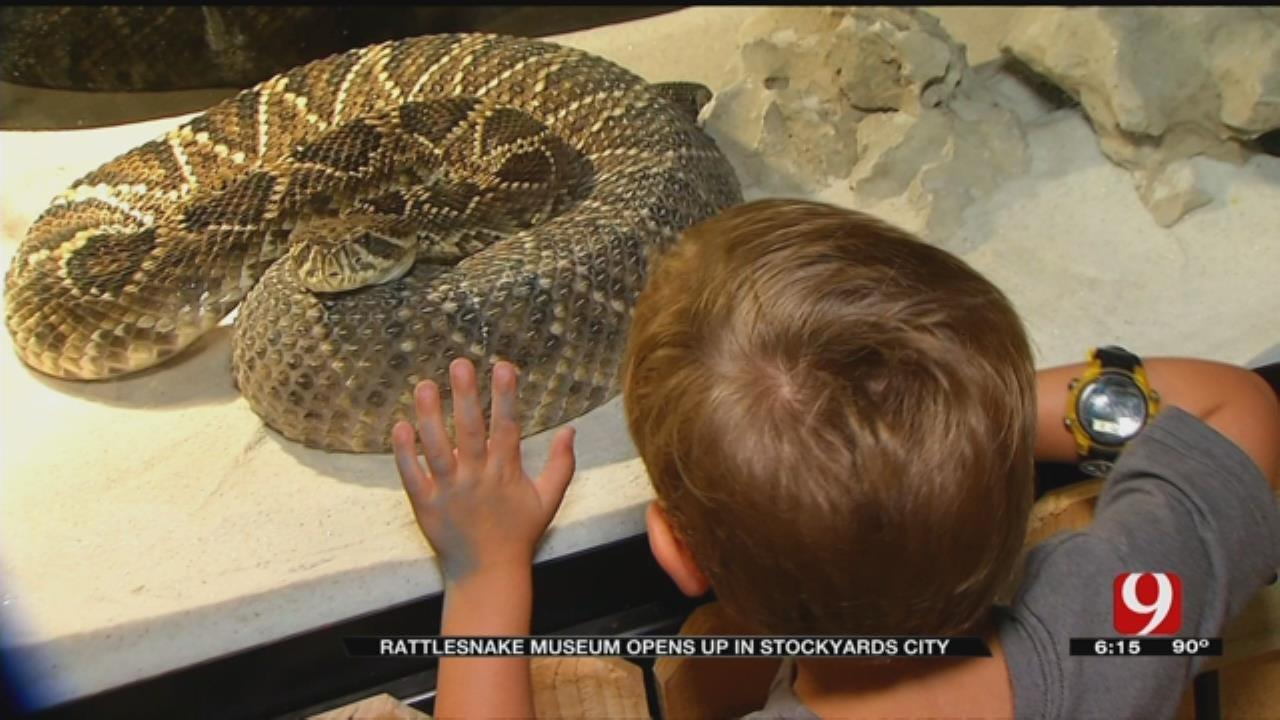 Rattlesnake Museum Opens In OKC