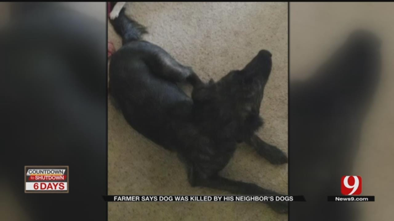 Farmer Says Dog Was Attacked, Killed By Neighbor's Dogs Near Wellston