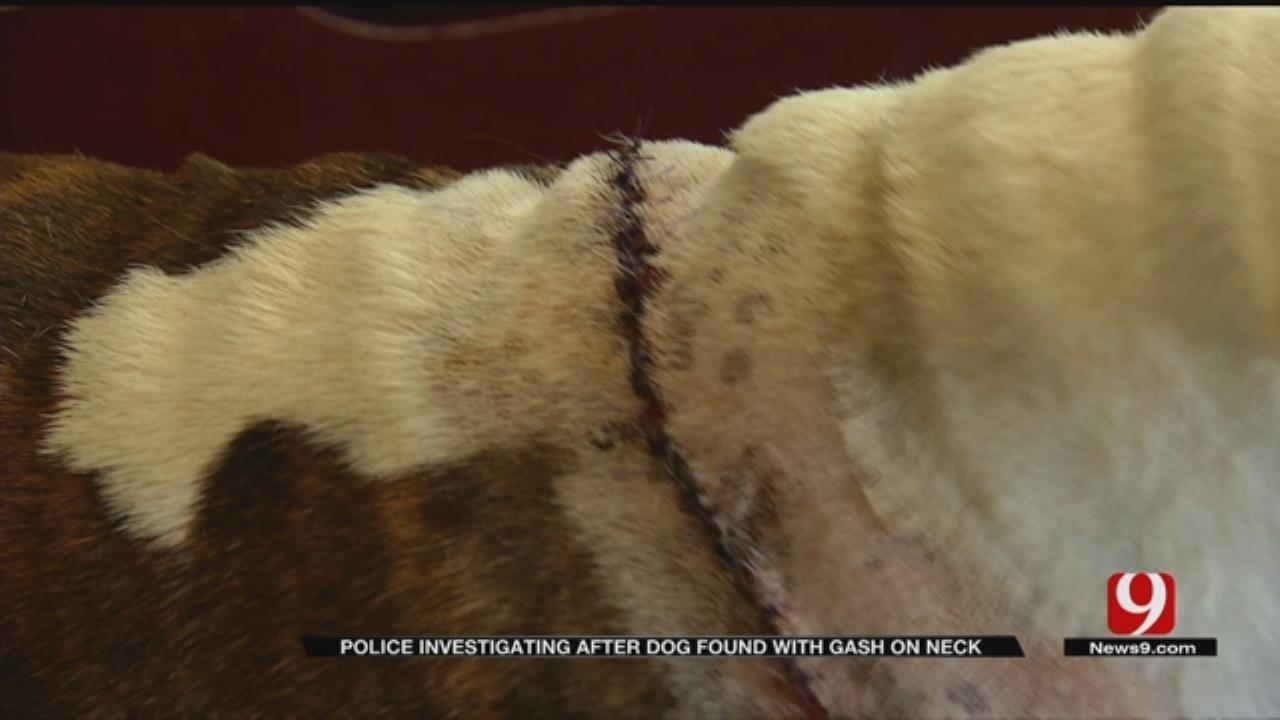 Police Investigate After Dog Suffers Disturbing Wound