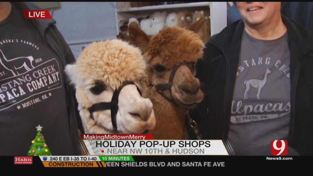Alpacas Make Debut Appearance At Holiday Pop-Up Shops