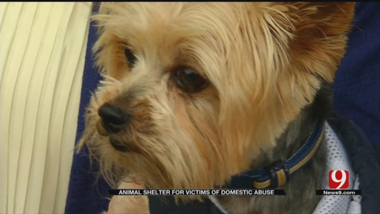 Animal Shelter For Victims Of Domestic Abuse Opens In Norman
