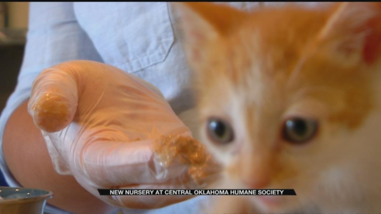 Central Oklahoma Humane Society Neonatal Nursery Needs Volunteers