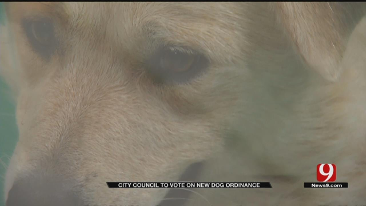 OKC Looks To Change Animal Welfare Laws