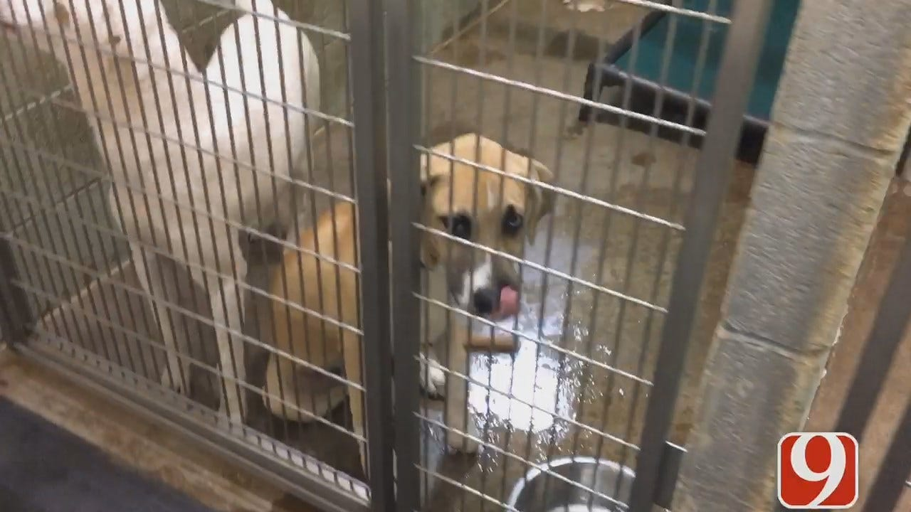 MWC Animal Welfare Overwhelmed By Surrenders And Strays