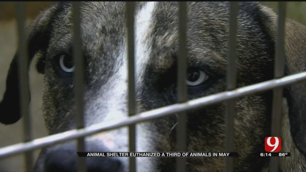 MWC Animal Welfare Overwhelmed By Animals