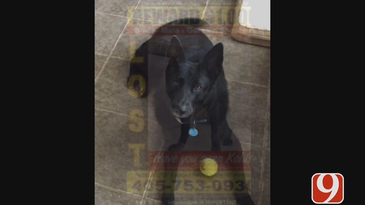 WEB EXTRA: Guthrie Family In Search Of Missing Dog