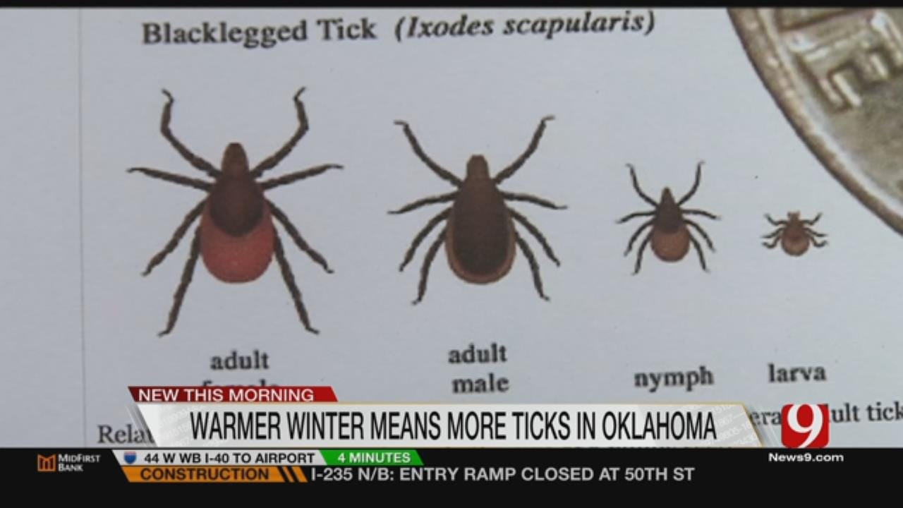 State's Mild Winter Leads To Record Increase In Ticks