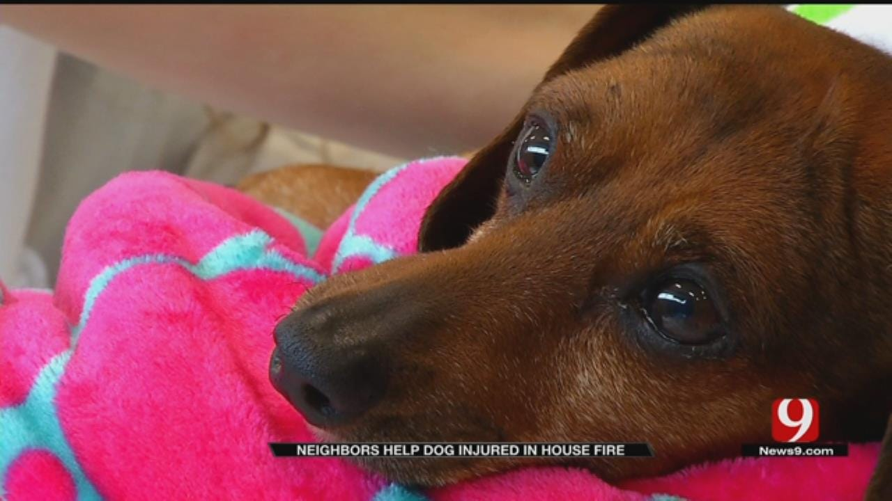 Dog Recovering After Mustang House Fire Claims Owner's Life