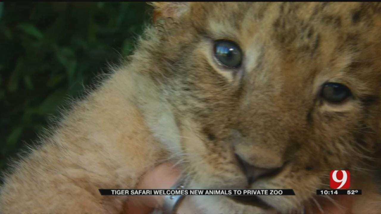 Tiger Safari Welcomes New Animals To Private Zoo
