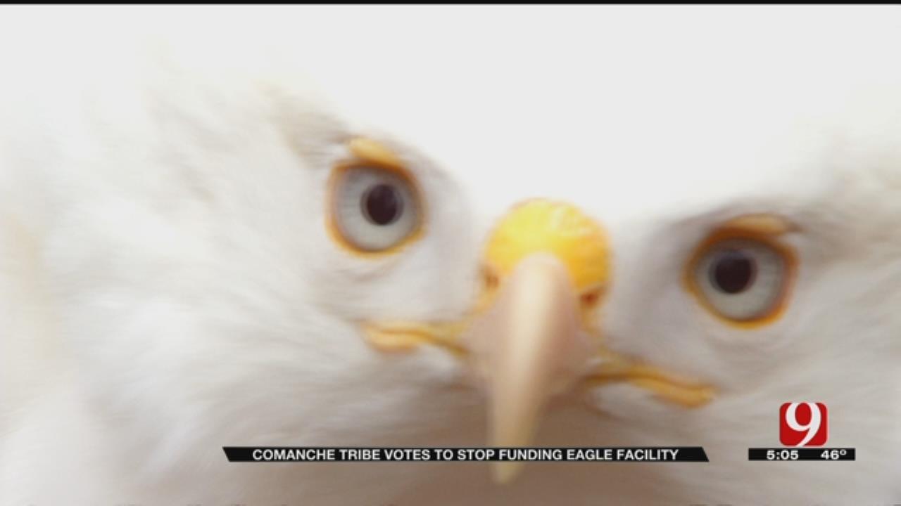Eagle Breeding Facility Endangered After Tribe Stops Funding Program