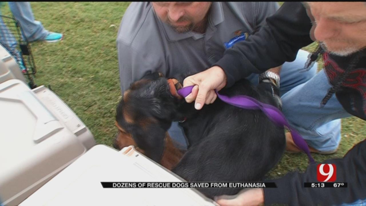 Dozens Of Rescue Dogs Saved From Euthanasia