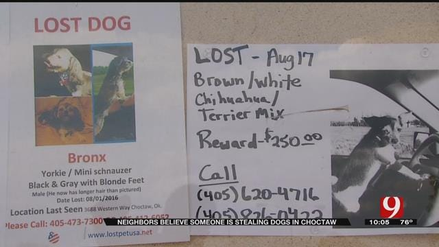 Missing Dogs Spark Fear in Choctaw