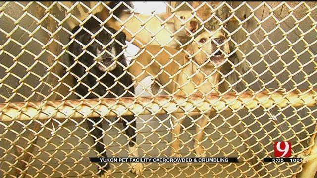 Yukon Animal Shelter Overcrowded, Crumbling