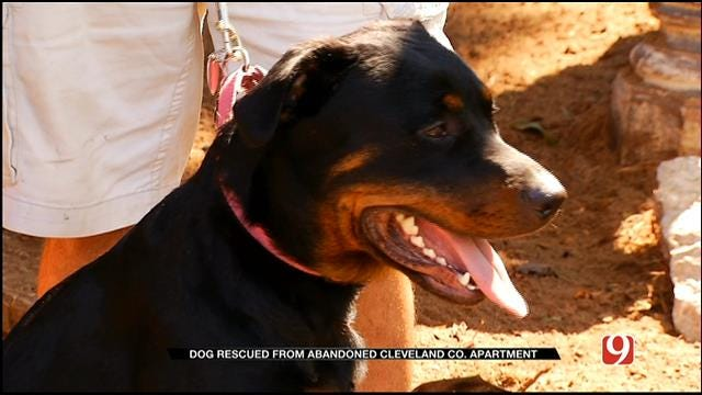Dog Rescued From Abandoned Cleveland Co. Apartment