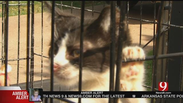 Accused Animal Hoarder Speaks Out