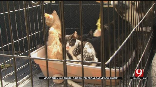 More Than 100 Animals Rescued From Garvin Co. Home