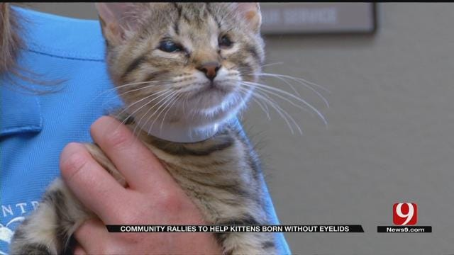 Community Rallies To Save Kittens Born Without Eyelids In OKC