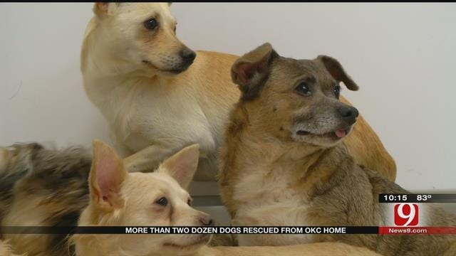 More Than Two Dozen Dogs Rescued From NW OKC Home