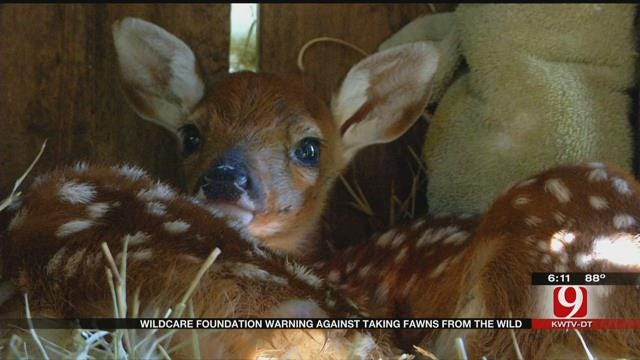 Wildcare Foundation Warning Against Taking Fawns From The Wild