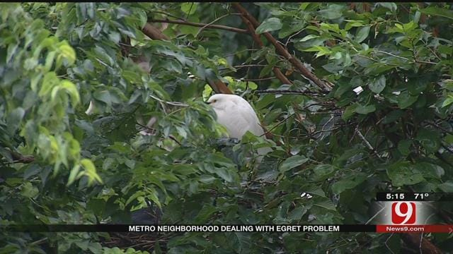 Residents Say Egrets Are Wreaking Havoc In SE OKC Neighborhood