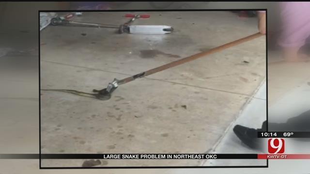 Large Snakes Appear In Northeast Oklahoma City Neighborhood