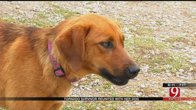 Believed Lost In The Storm, Wynnewood Family's Dog Makes Miraculous Return