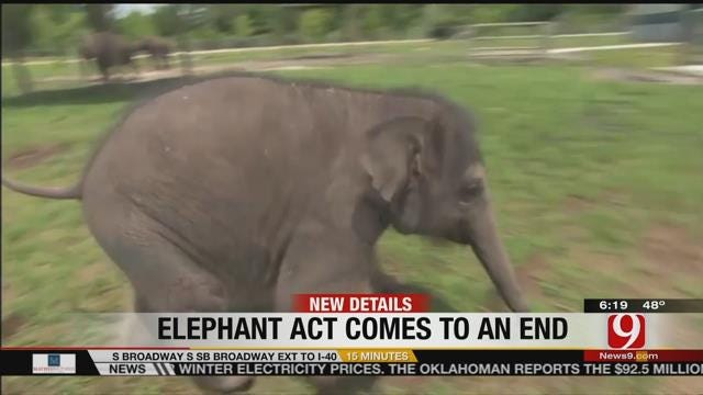 11 Elephants To Retire After Performing Final Show With Circus