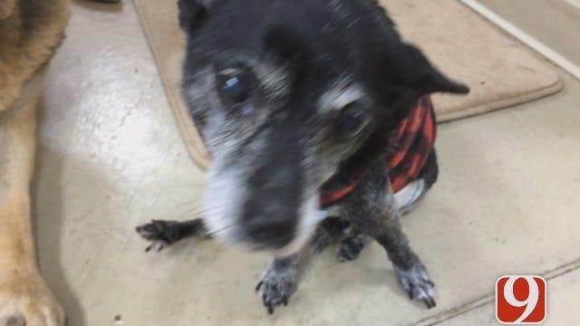 OKC Police: Dogs Scare Off Animal Clinic Burglar