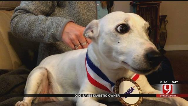 Dogs Saves Diabetic Owner's Life In Metro