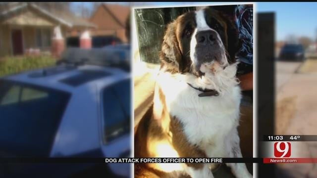 Man In Serious Condition Following 'Vicious' Dog Attack In NW OKC