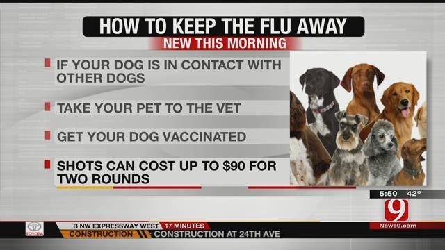 Vets Concerned Over Flu Epidemic In Dogs