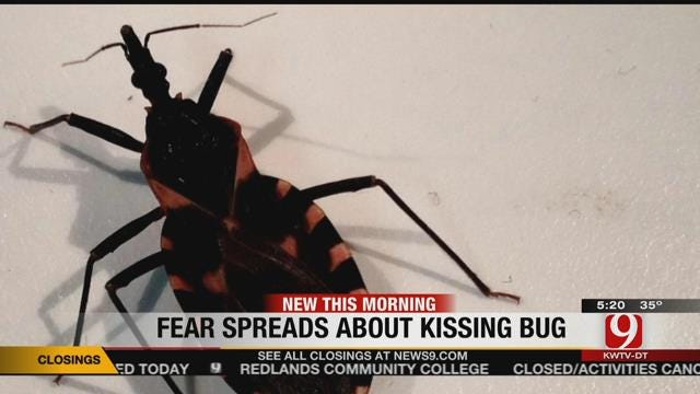 Should We Fear The 'Kissing Bug?'