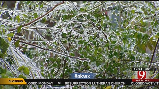 Winter Storm Clean Up Begins After Ice Melts In OKC Metro