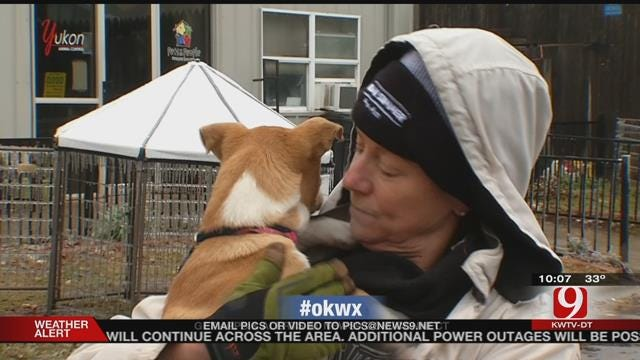 Volunteers Help Animal Shelter In Yukon After Ice Storm
