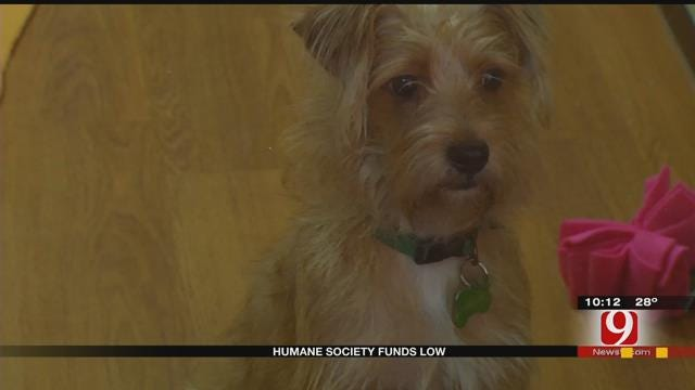 Central OK Humane Society In Need Of Donations