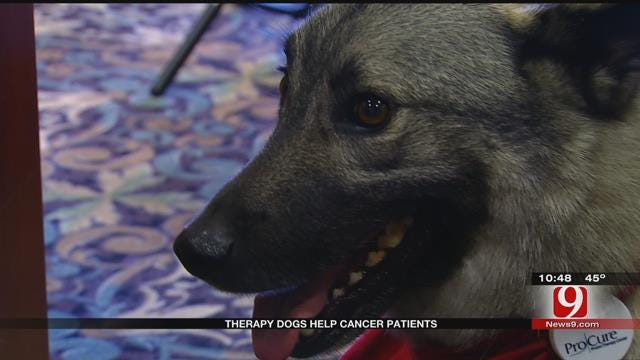UK Boy Finds Pet While Fighting Cancer In OK