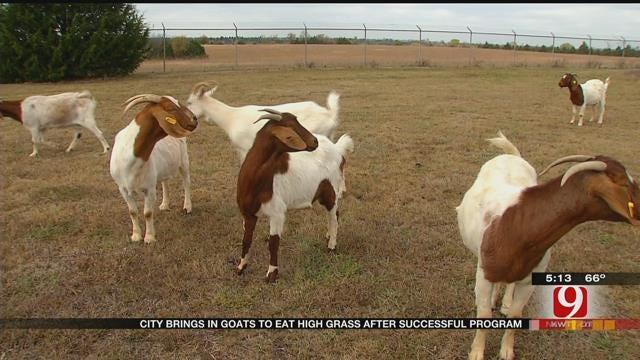 OKC Buys Goats After Successful Pilot Program