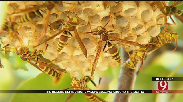 Wet Spring Weather Led To Booming Oklahoma Wasp Population