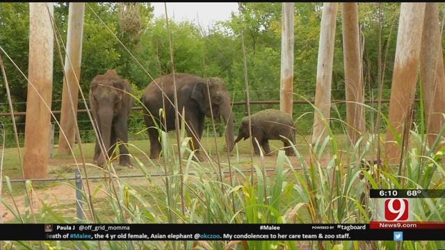OKC Zoo Mourning Loss Of Asian Elephant Malee