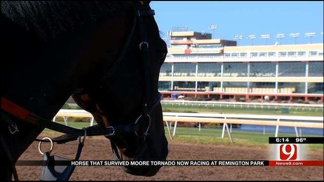 Moore Tornado Horse Survivor Wins At Remington Park
