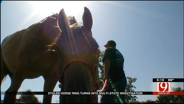 Stolen Horse Ring Turns Into Multi-State Investigation