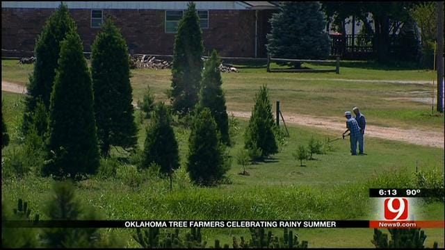 Oklahoma Tree Farmers Celebrating Rainy Summer