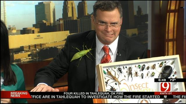 Giant Insects Invade News 9 Studio Friday Morning