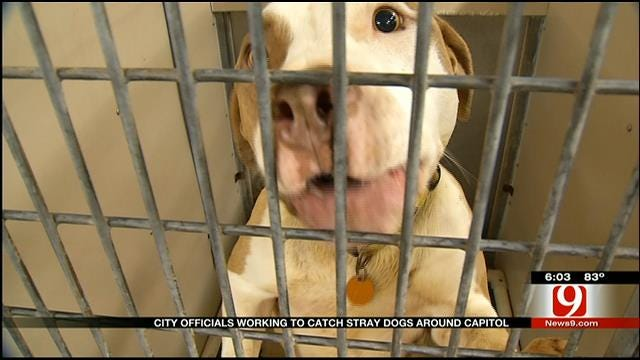OKC Euthanizes Stray Dogs Accused Of Attacks At State Capitol
