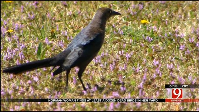 Norman Woman Finds At Least A Dozen Dead Birds In Yard