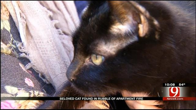 Miracle Cat Survives Woodward Apartment Fire