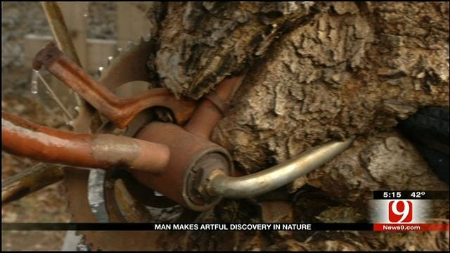 Edmond Man Finds Bicycle Fully Engulfed By Tree