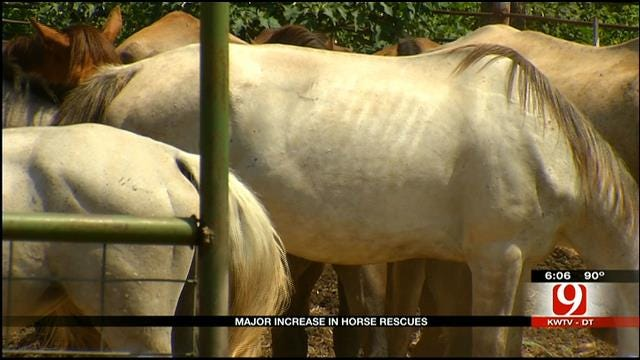 Animal Cruelty Cases Cause Surge in Rescues, Volunteers Say